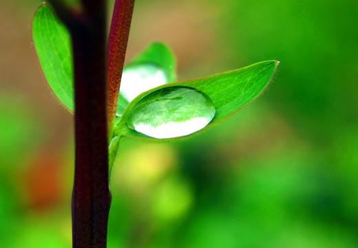 Mengungkap Fakta: Keimanan Bisa Bertambah dan Bisa Berkurang
